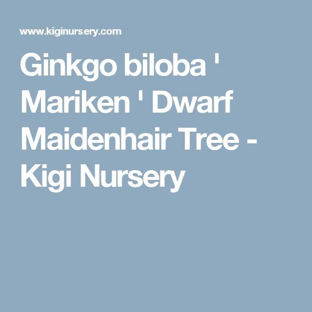 best 25 maidenhair tree ideas on pinterest japanese. Black Bedroom Furniture Sets. Home Design Ideas