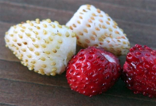 HOW TO; Save and Grow Alpine Strawberry Seeds.