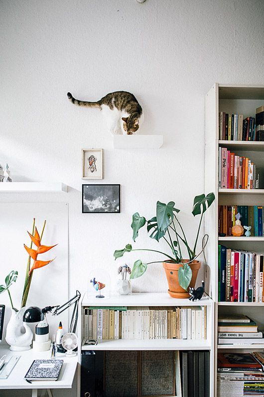 modern home tour via hertz & blat with cat climbing on wall decor…