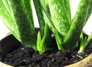 plant8