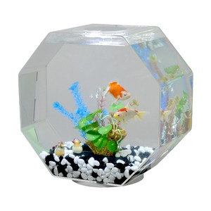 Tabletop Octagon Aquarium Clear 155 Now Featured On
