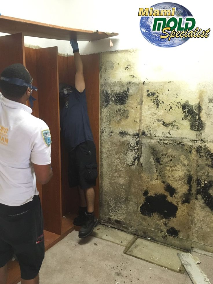 High Tech, Organic, and Eco friendly mold remediation services, plus a signature 2 year warranty! Protect you and your loved one's by making sure the air you breathe in your home is crisp, clean, and free of mold.
