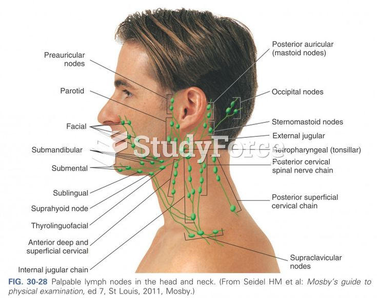 Palpable Lymph Nodes In The Head And Neck