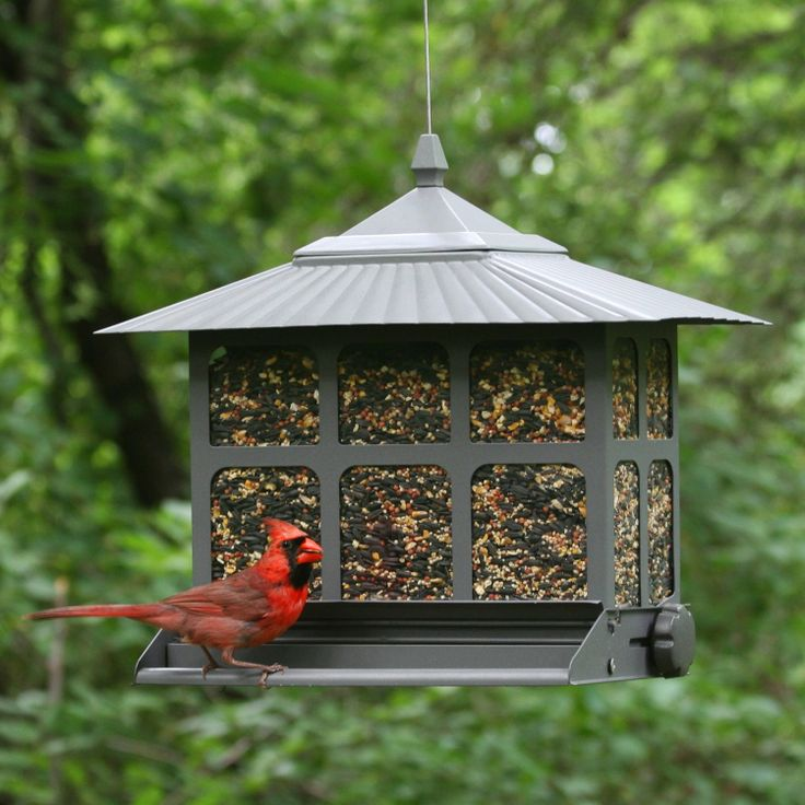 feeding house feeders expensive new on sparrow bird feeder a myths