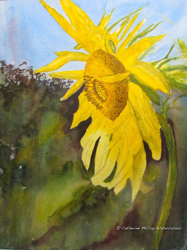 """Let the Sunshine. Watercolour 12"""" x 16"""" by Catherine McCoy"""