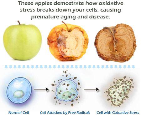 Fight Oxidative Stress and AGING Through Nrf2 Activation http://www.mylifevantage.com/hughesmarissa