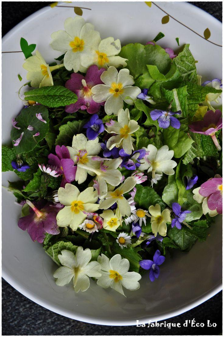 salade fleurs sauvages, fleurs comestibles