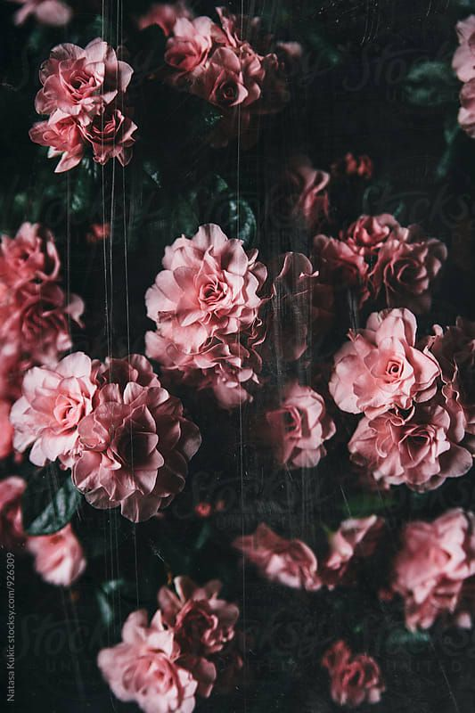 Vintage Grainy Scratchy Flowery Background Download This High Resolution Stock Photo By Natasa Kukic From Flowery Background Flower Wallpaper Flower Aesthetic