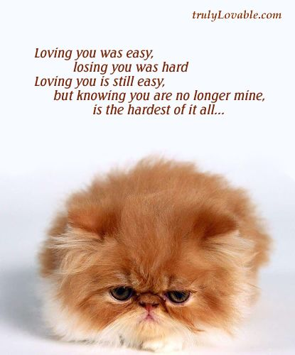 Losing Friendship Quotes   Losing you was hard, Broken Hearts Cards