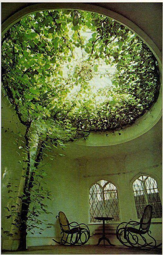 Indoor tree - I love the windows, too.