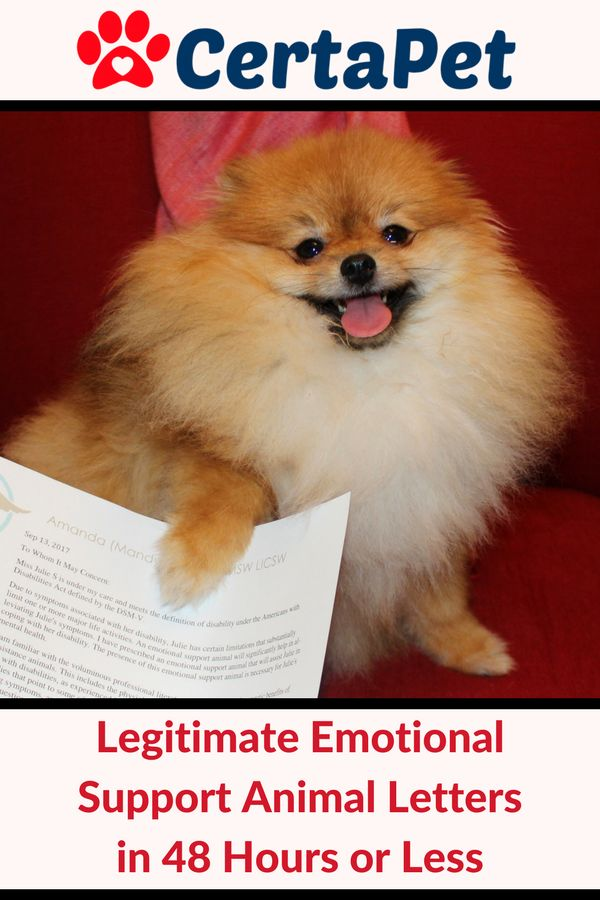Get An Emotional Support Pet Letter In  Hours