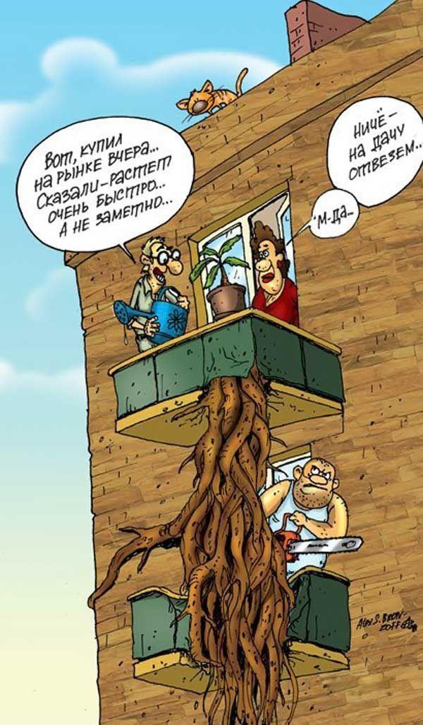 дерева смешные картинки карикатуры юмор субпровинциального значения