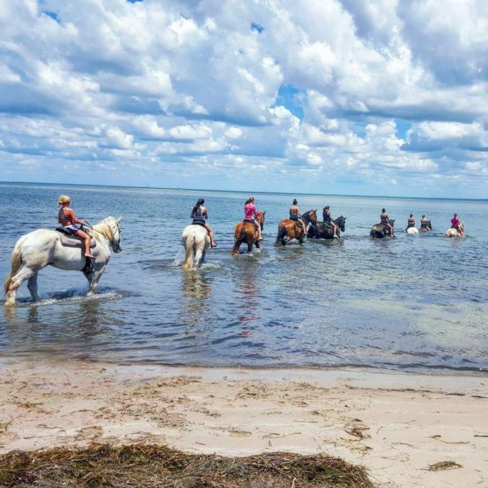Go Horseback Swimming On This Incredible Riding Trail In Florida. Travel memories that you'll never forget.