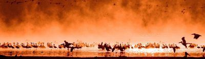 Oranje Vogels - Canvas Schilderij Panorama 118 x 36 cm - 20% korting