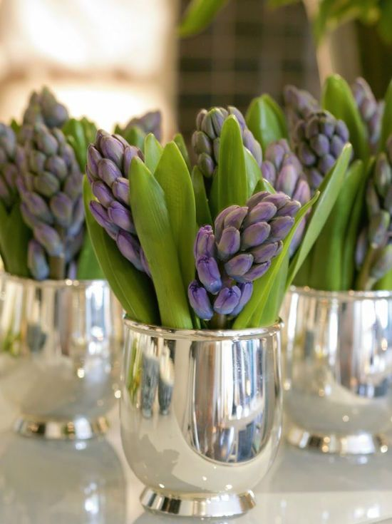 Hyacinths in silver julep cups - Perfect for your Easter Table