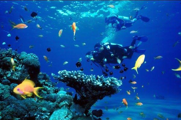 Terpopuler 30 Gambar Pemandangan Bawah Laut Hd Our Coral Reef 523688 Views 50 Lukisan Pemandangan Alam Gunung Laut Dan Pan Di 2020 Pemandangan Taman Nasional Pantai
