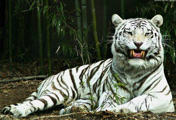"""Résultat de recherche d'images pour """"animaux en voie de disparition dans le monde liste"""""""