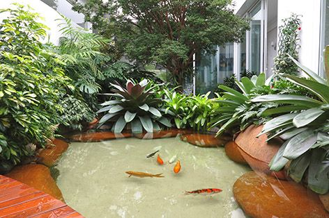Lago externo com carpas gardening jardinagem for Carpas ornamentales