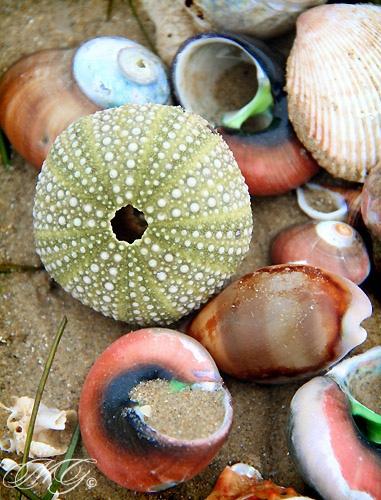Shells on the Beach by Marcie Gonzalez