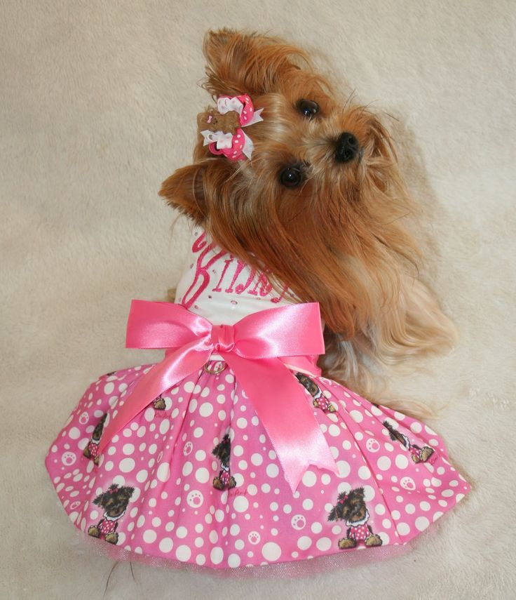 Yorkie Baby Clothes