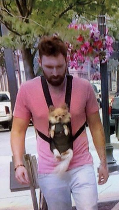 nice Front Baby Carrier and Man's Best Friend by http://dezdemonhumoraddiction.space/walmart-humor/front-baby-carrier-and-mans-best-friend/