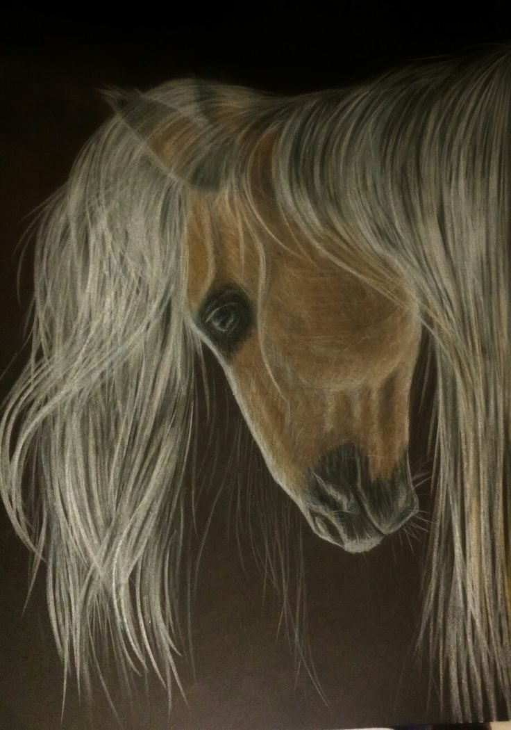 Horse sketch on black paper