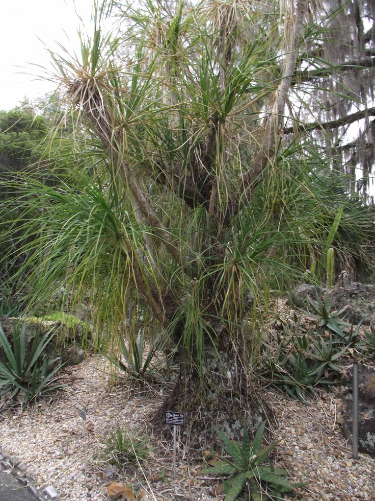 1000 Images About Kanapaha Botanical Gardens Gainesville Florida On Pinterest