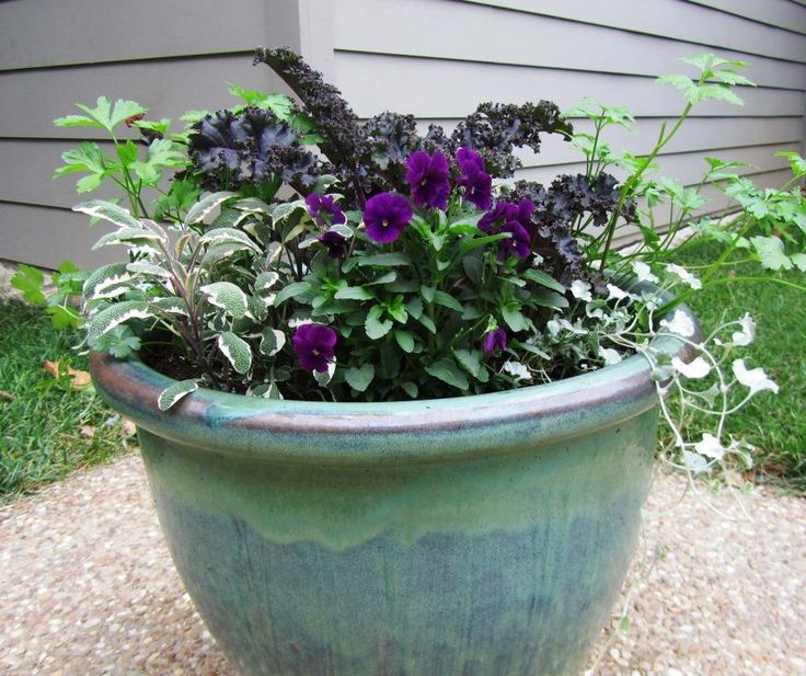 Best 25 winter container gardening ideas on pinterest christmas urns winter pansies and - Winter container garden ideas ...