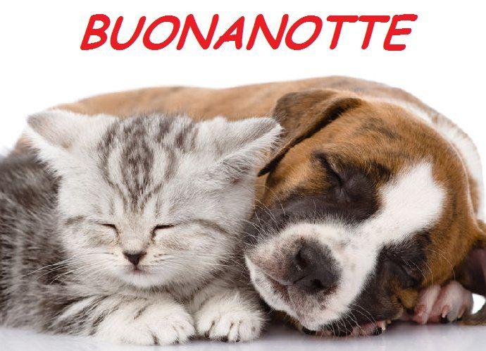 3045 best buona notte images on pinterest for Buongiorno con gattini