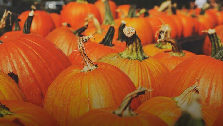 Top 10 Pumpkin Patches Around Austin
