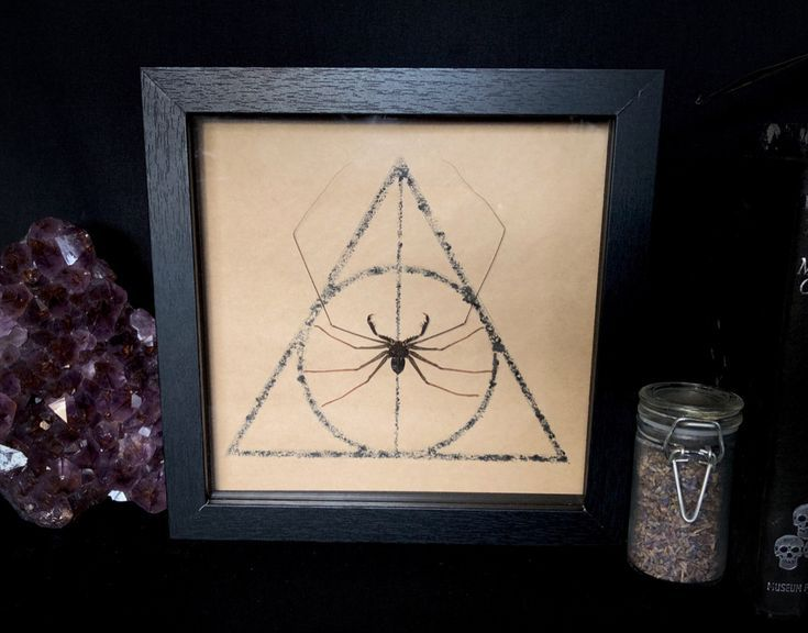Harry Potter Deathly Hallows Symbol Taxidermy Whip Spider.  #headbands[ad_1]  Ha…  – Head Bands