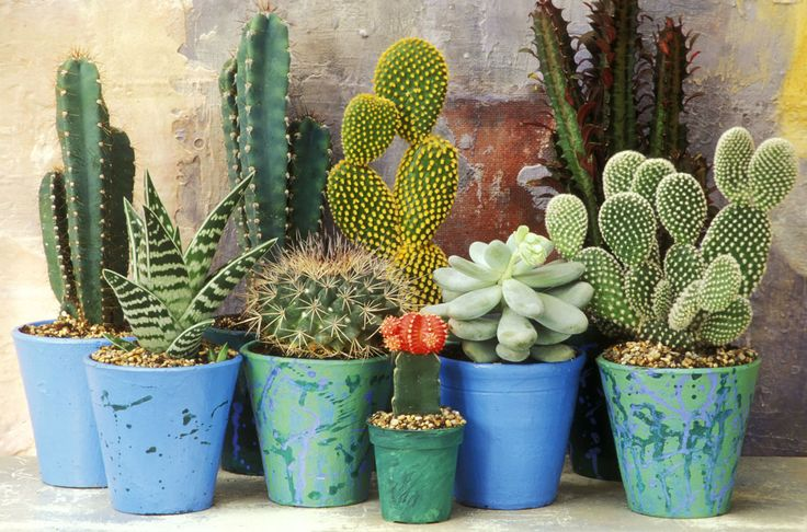 7 Things You May Not Know About Cacti - Cactus Facts