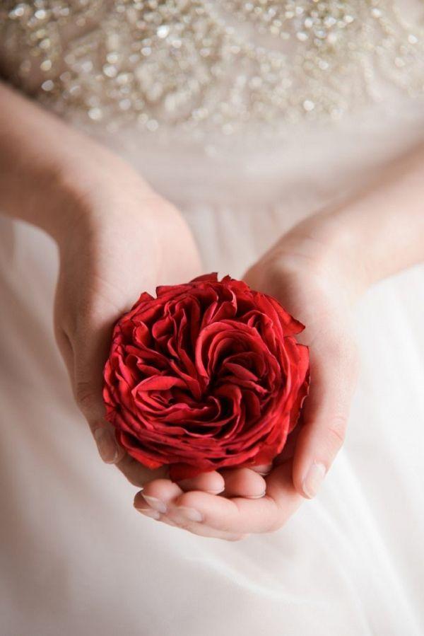 Red Cabbage Rose at Rancho Villa Garden in Colorado   RebeccaMarie Fine Art Photography on @mtnsidebride via @aislesociety