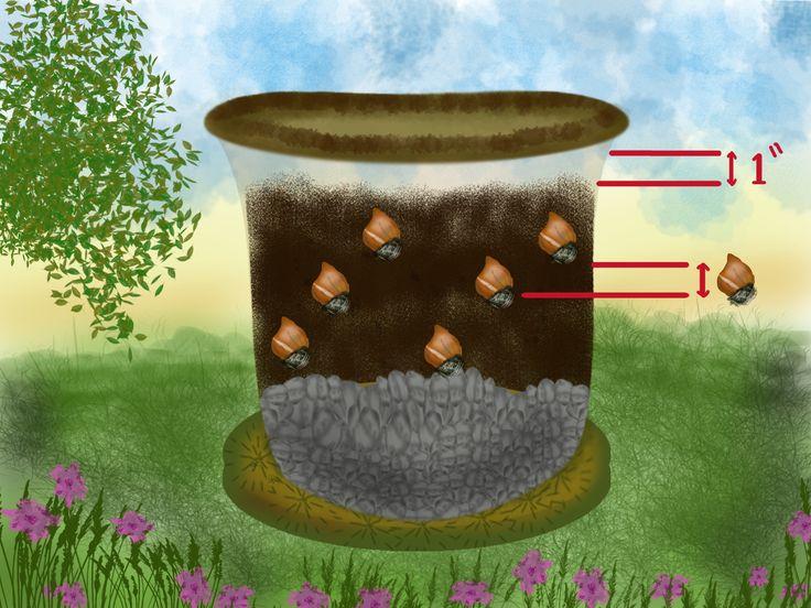 wikiHow to Grow Tulips in Pots -- via wikiHow.com