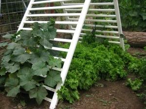 Repurpose crib rails to use as a cucumber trellis - nice!