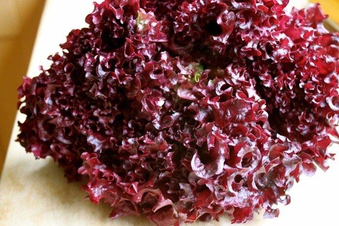 Selada merah For 100seed just 5k sms / wa 085777119992 line id : silkynazma