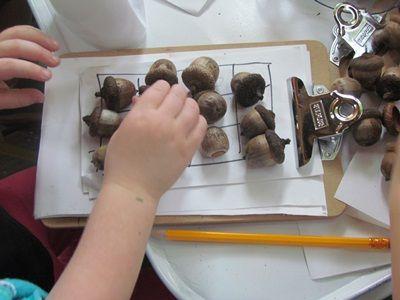 Exploring acorns in preschool - Teach Preschool: Science Ideas, Pre School, Fall Preschool, Schools Ideas, Preschool Math, Table Sci Ideas, Natural Preschool, Classroom Ideas Fun, Preschool Classroom