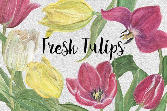 Watercolor Fresh Tulips by ramika on @creativemarket
