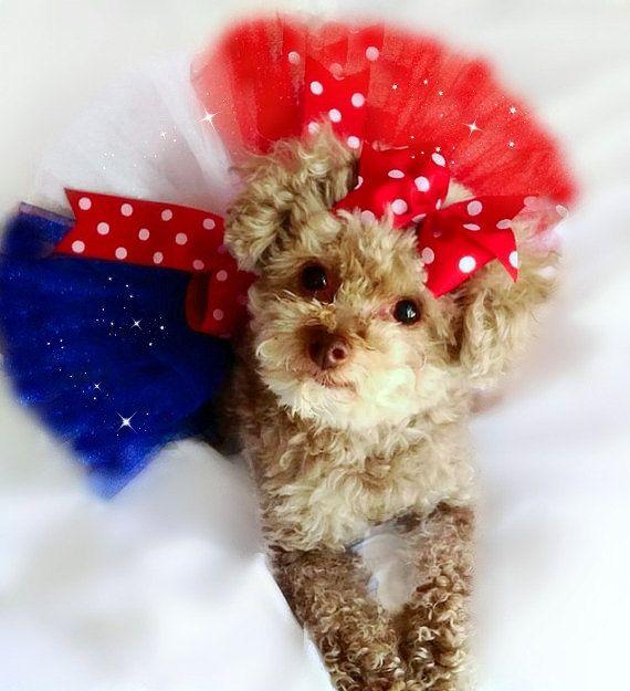 Dog Tutu, 4th of July Dog Tutu, Dog Tutu Dress, Fluffy Dog Tutu, Patriotic dog, Dog Costume, Custom Dog Tutu, Dog Clothing, Pet Accessories  Perfect
