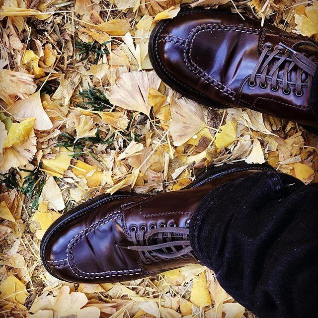 2017/11/25 17:13:33 k_a_z_u_k_u_n 銀杏の季節もあとわずかかな…  快晴につき、タンカーブーツで銀杏祭りに。。。 #alden  #あしもと倶楽部  #足元倶楽部  #秋  #銀杏  #革靴  #オールデン  #外苑前  #表参道