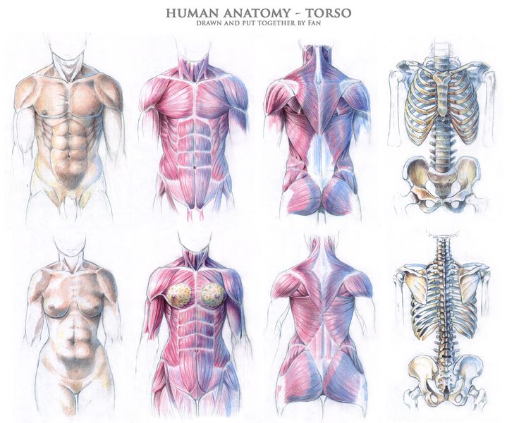 191 best anatomy images on Pinterest | Drawing faces, Drawing ...