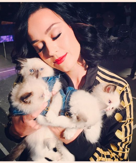 Will Katy Perry be wearing McDonalds at her big Superbowl performance? http://lookm.ag/AUnxSA