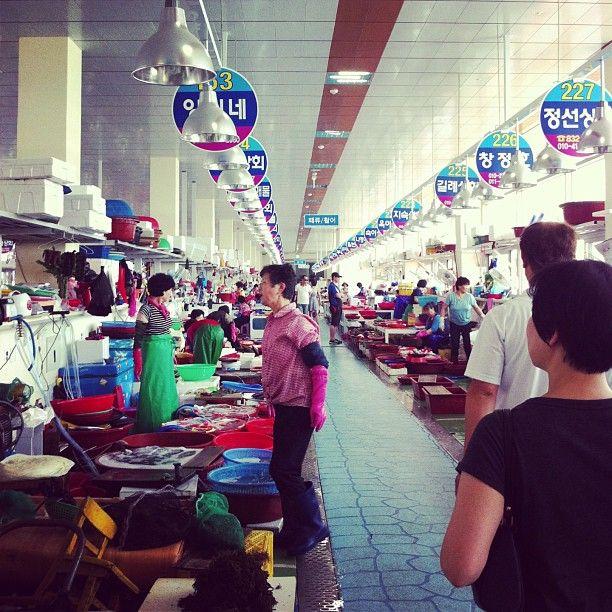 haaileychoi 시장구경! #삼천포수산시장 #삼천포 #korea #fish #market #fishmarket #namhae #samcheonpo #남해 / #골목 #골목길 #시장 / 경상남 사천 동 / 2013 08 11 /