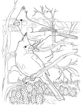 Desert Cardinals Coloring Page From Northern Cardinal Category Select 27237 Printable Crafts Of Cartoons Nature Animals Bible And Many More