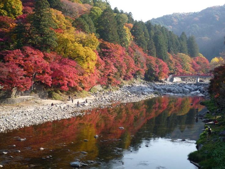 2012/11/13撮影、ちょうど見ごろになってきている香嵐渓のもみじです。