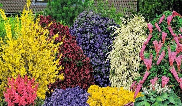 Миксбордер – нетривиальные идеи для вашего сада — Мир Растений
