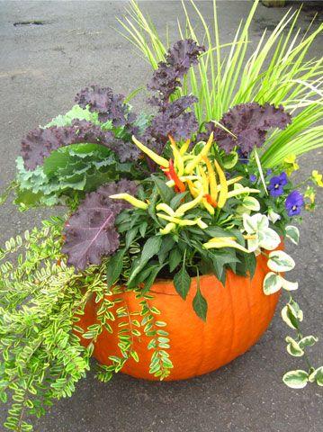 Pumpkin Planter #DIY with recipe / Pike Nurseries
