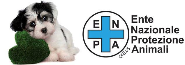 """Best Western Italia: quattro zampe in hotel. È questa l'idea di Best Western Italia che lancia, in collaborazione con #ENPA, il progetto """"Hotel Pet Friendly"""" dedicato a tutti coloro che non vogliono rinunciare alle vacanze con il proprio amico a quattro zampe. #animali #pets #vacanze #hotel"""