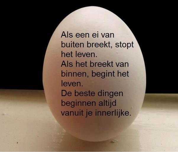 Als een ei ....