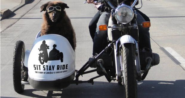 Dogs in Motorcycle Sidecars I want a sidecar for my guys!